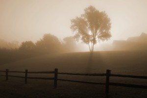Sunrise_in_the_fog_7723