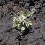 Of Lava Floes and Religious Insight